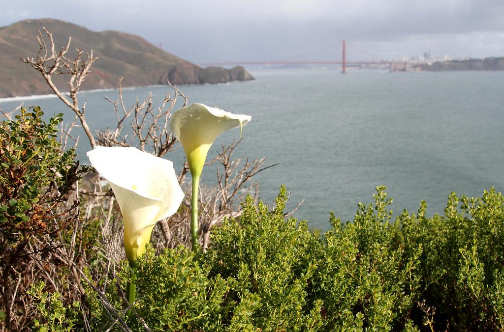Marine Headlands, San Francisco