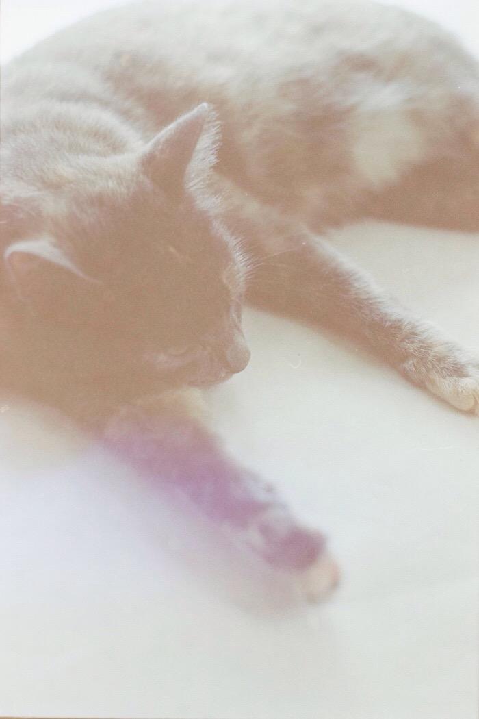 Portra 160 - peaches the cat