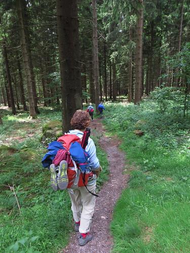 20170605 07 152 Regia Wald Weg Pilger ElisabethB