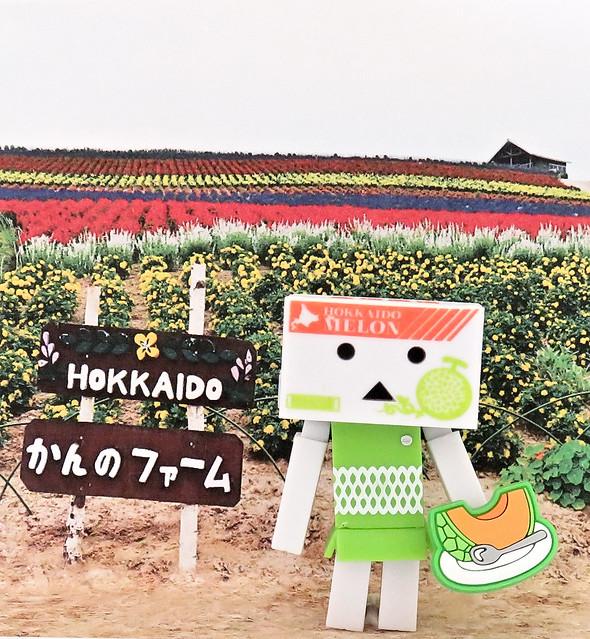 Omiyage Danboard Hokkaido Melon