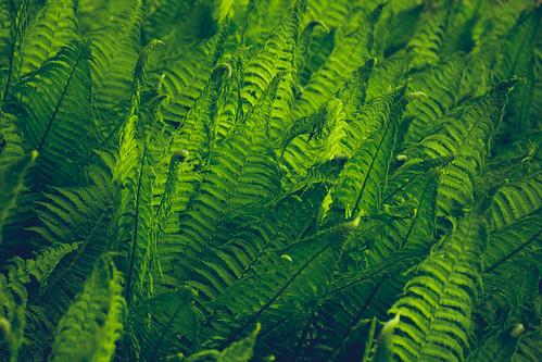 Vivid Ferns
