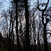 Grimscar Woods 17/02/18