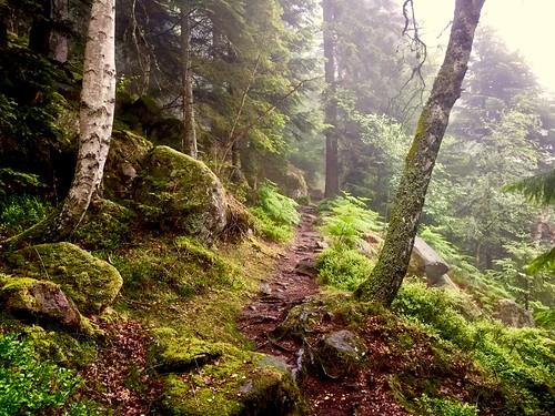 Sortie trail