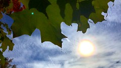 Leaves in the Sun III