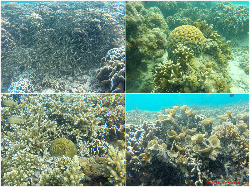 Corals in Antonia Island Resort