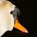 Westfield Pill Swan-9
