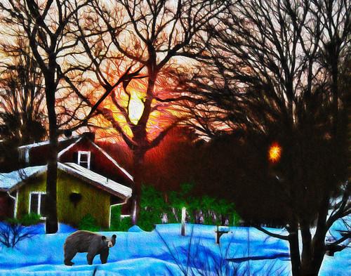 winter snow bear sunrise awardtree