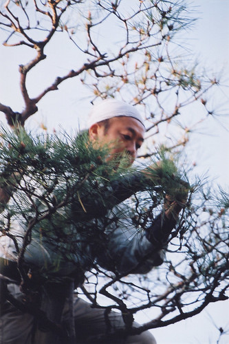 In Kyoto at Ginkakuji Temple the grounds were meticulously maintained by volunteers including this man who was pruning this Japanese pine tree one needle at a time