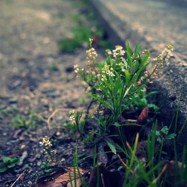 片隅にも春