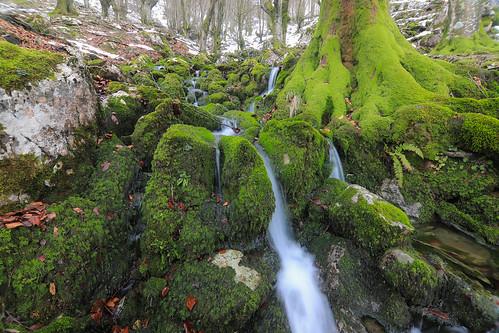 Parque Natural de Gorbeia #DePaseoConLarri #Flickr -57