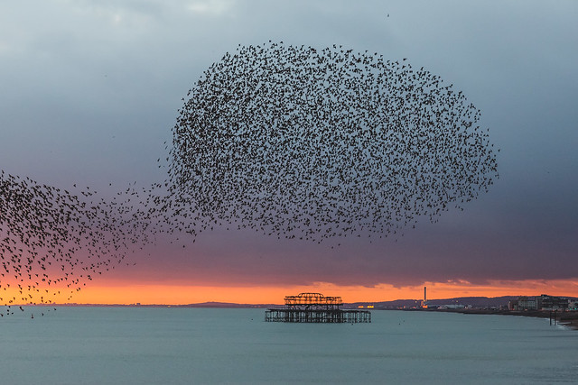 Brighton's Starlings And The West Pier