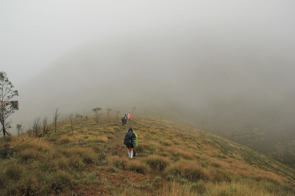 Climbing through grassland to Meesapulimala Peak