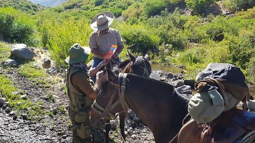 EL MELADO; Carabineros realiza Prevención para Evitar delitos de Abigeato en la Cordillera de Linares
