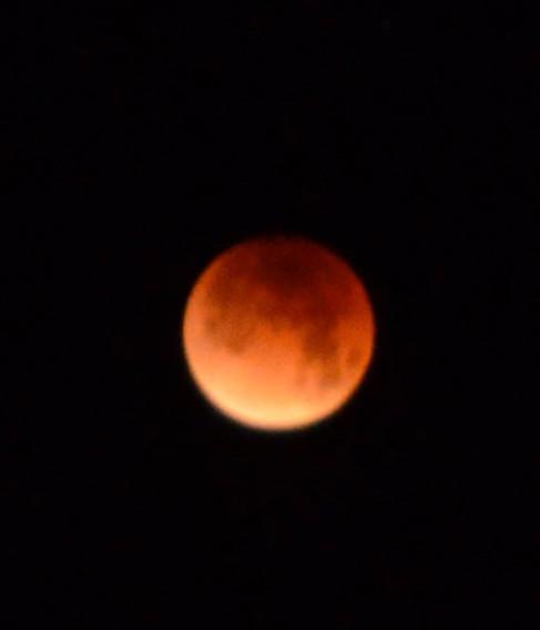 Joshua Tree - lunar eclipse photo
