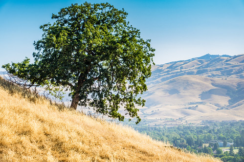 ca california sanjose santaclaracountyparks santacruzmountains santateresacountypark dryseason flora grass hiking morning mountains nature outdoor park recreation summer trees vegetation