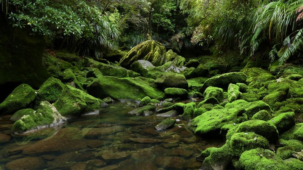 Bullock Creek ~ Mossy karst wonderland