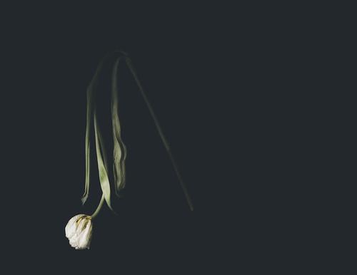 028 Tulip time 6