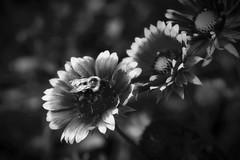 Super Floral Monochrome