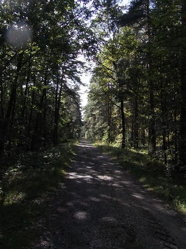 20100824 269 0104 Jakobus Weg Wald
