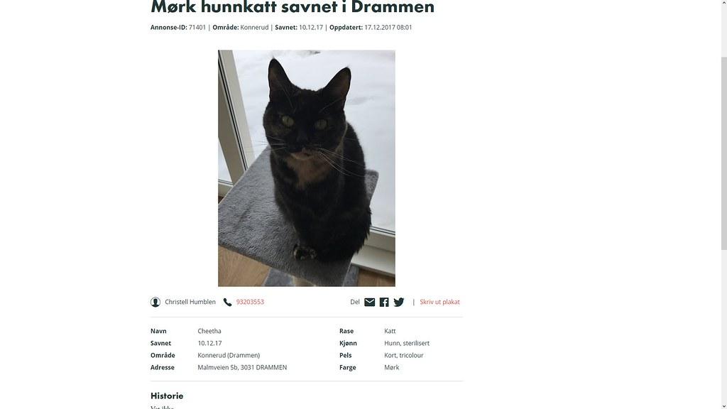 heks savner katt