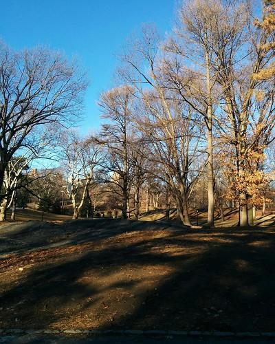 Central Park in January (2) #newyorkcity #newyork #manhattan #centralpark #winter #january #latergram
