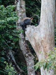 2017 decembre. Arusha national park- animals