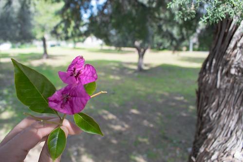 Il fiore e l' ulivo