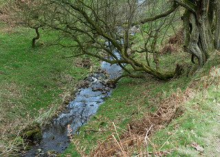 20170330-74_Dundale Griff - Stream