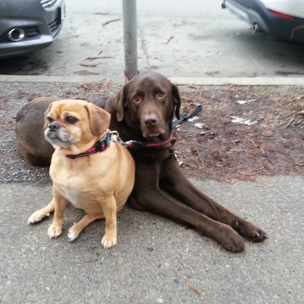 Waitin' for their skater. #adogslife #boarderlabs #skateboarding #4thave #kitsilano