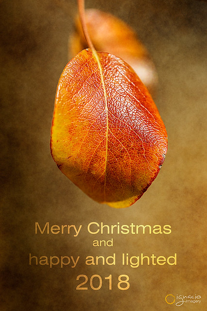Merry Christmas for all photography lovers!