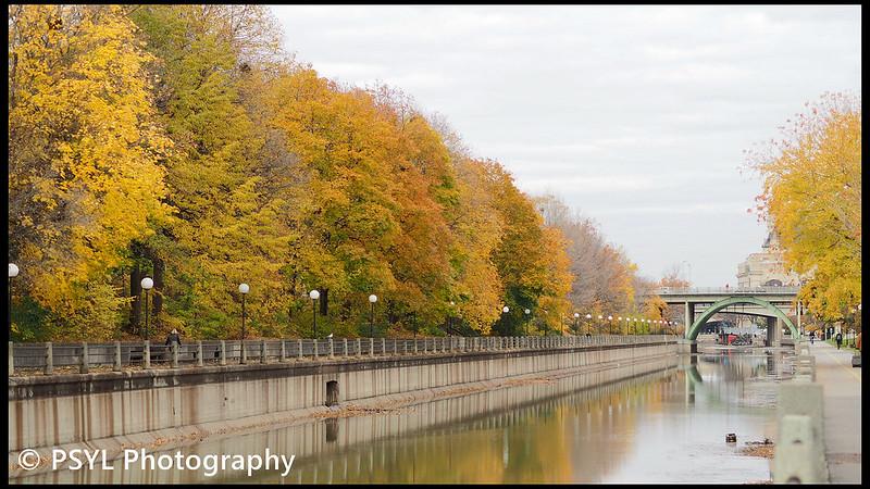 Autumn colours along canal