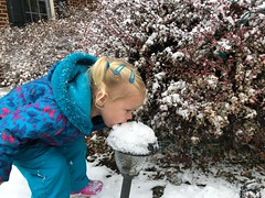 Madeleine delights in eating snow off things today