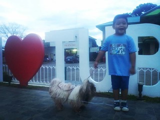 Getting these kids to pose is no easy task □□□ #shihtzuphilippines #shihtzulovers #shihtzugram #dogsofinstagram