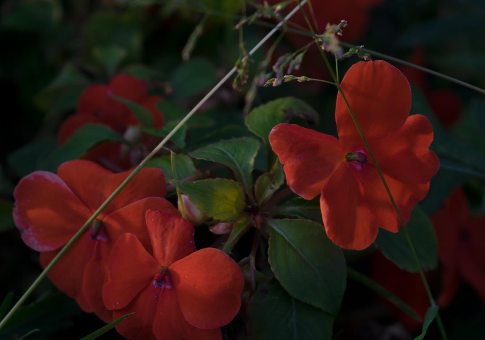 Вечерние бабочки-цветы