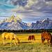 horses grazing at Elk Flats by Marvin Bredel