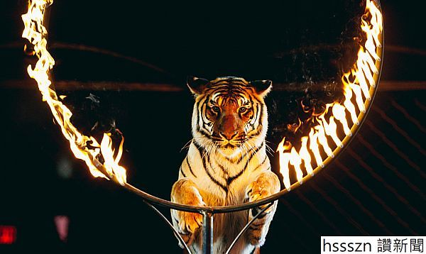 cat-firehoop_600_358