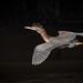Flying Light by gseloff