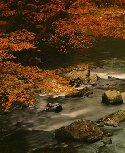 Aichi -autumn scene-