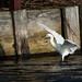 Little Egret - Widewater (57)