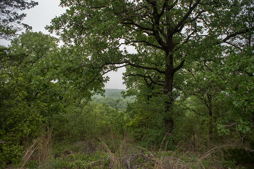 forest mckinney roughs nature park bastrop county texas usa unitedstatesofamerica natural south southern southwest austin