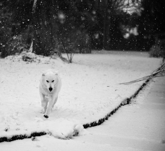 snowtime for nana