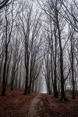 Setmurthy_dusk_03894