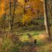 running from Autumn...