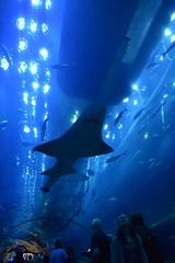 Discovering Ocean - Dubai Aquarium
