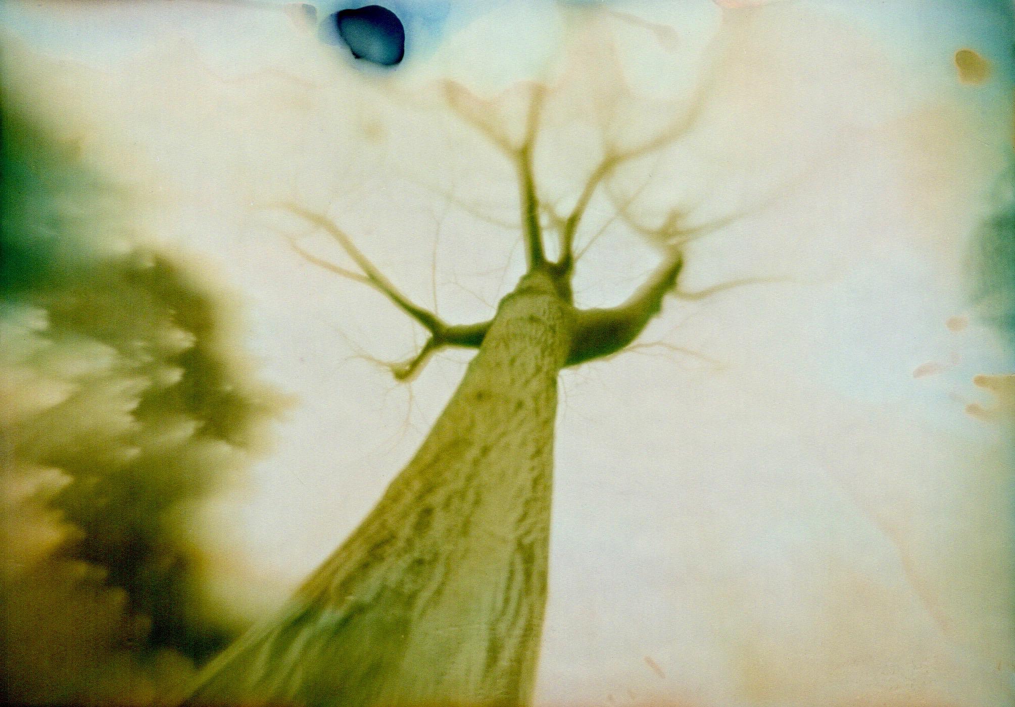 Tree001 (1)