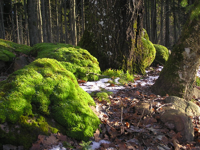 Green mosses