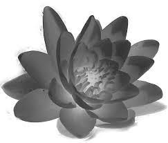 koreanapps-flowersearch17