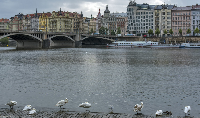 Dancing House and the Sleeping Swans