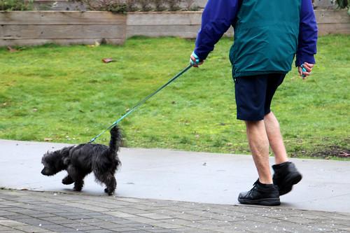 004/365 Silly Walk – Canine Edition