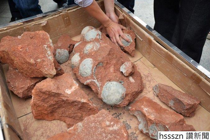 1514798564_dinosaur-egg-fossils_675_450